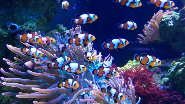 How to keep a clean fish tank